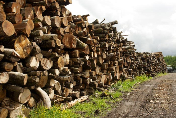 Gatehouse nursery hardwood and softwood logs available for delivery
